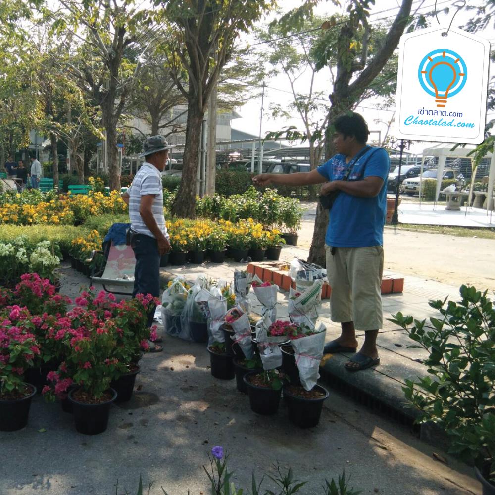 ตลาดนัดต้นไม้ สนามหลวง 2 ตลาดนัด เช่าพื้นที่ขายของ เช่าที่ขายของ